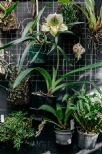 Orchid Grower List