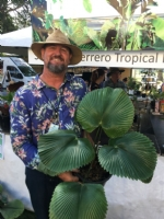 Meet: Mike Ferrero, Just a Touch of Paradise, Tropical Plant Expert